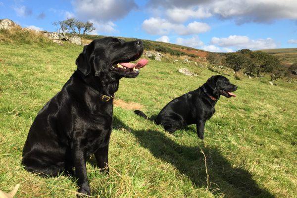 Parbuckle Black Labradors